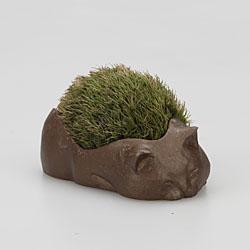 苔盆栽 ねこ
